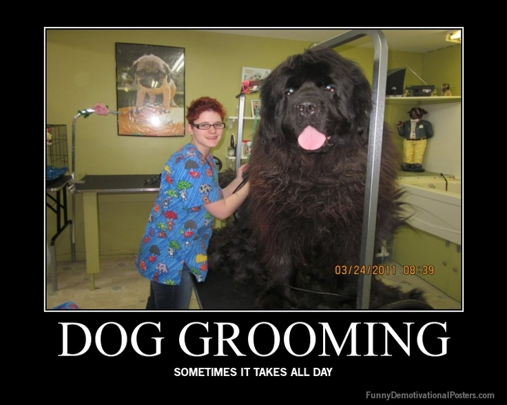 Ekcgrooming everything about dog grooming information products ill do it myself is not a good answer for avoiding expensive fees at the groomer the time and money you will spend figuring out how to groom your dog solutioingenieria Choice Image